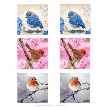 GlitterFilm & Vintage Hues 12 Card Kit Songbird Squares
