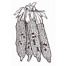 Indian Corn Stamp