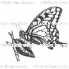 New Butterfly Unmounted Stamp