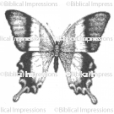 Large Butterfly Unmounted Stamp