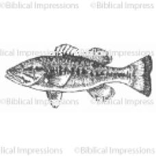 Bass Unmounted Stamp