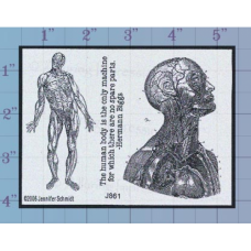 The Human Body Unmounted Stamp