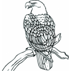 Bald Eagle, Art Acetate
