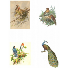 Birds Pic 1, Vintage Hues