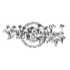 Buttercups Cling Stamp