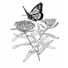 Butterfly on Yarrow, Art Acetate
