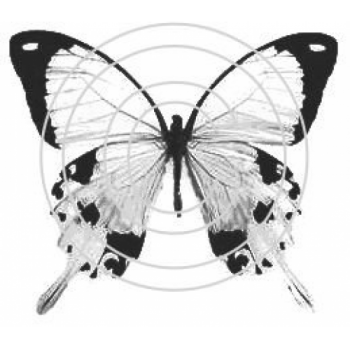 Calico Butterfly, Art Acetate