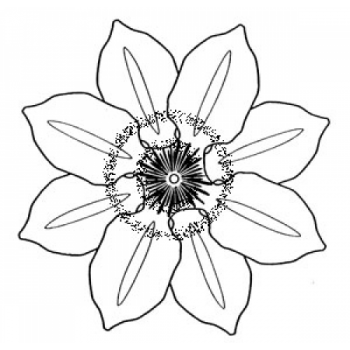 Clematis Cling Stamp, large