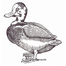 Duck Digital Stamp