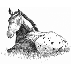 Appaloosa Foal Digital Stamp
