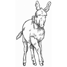 Donkey Digital Stamp