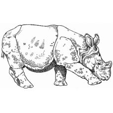 Baby Rhino Digital Stamp