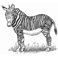 Zebra Digital Stamp