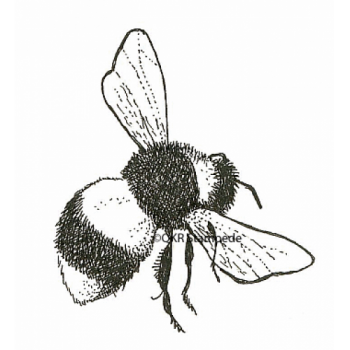 Bee Digital Stamp