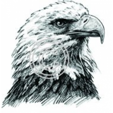 Eagle Profile, Art Acetate