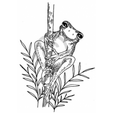 Green Tree Frog Cling Stamp