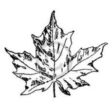 Small Maple Leaf Cling Stamp