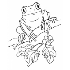 Tree Frog Art Acetate