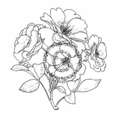 Wild Rose Cling Stamp