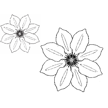 Clematis Flower Cling Stamp Set (2 stamps)
